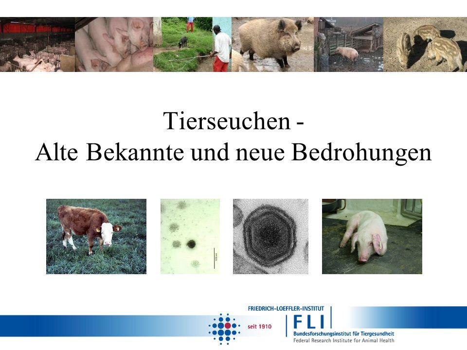Russland Offizielle Anzeige der ASP am 04.12.2007 Wie das Virus ins Land kam, konnte nicht genau geklärt werden, ein Eintrag aus Georgien erschien jedoch wahrscheinlich Das Virus wurde sowohl in Haus- als auch in Wildschweinen gefunden – zunächst Wildschweine in Tschetschenien betroffen – Übertragung auf freilaufende Hausschweine – seit 2008 alle Produktionsbereiche im Hausschwein betroffen – Rolle der Wildschweine bisher sekundäre (eher Opfer als Täter) Zwischen November 2007 und Ende 2012 gab es 426 bestätigte Nachweise – durchschnittlich 58 Ausbrüche im Hausschwein und 27 Fälle im Wildschwein pro Jahr – 37% Hinterhofhaltungen, 29% Schwarzwild, 16% industrielle Betriebe, 7% kommerzielle Kleinhaltungen Bis heute treten immer wieder Fälle auf, kein Hinweis auf Verbesserung der Lage Quelle der Bilder: Wikipedia