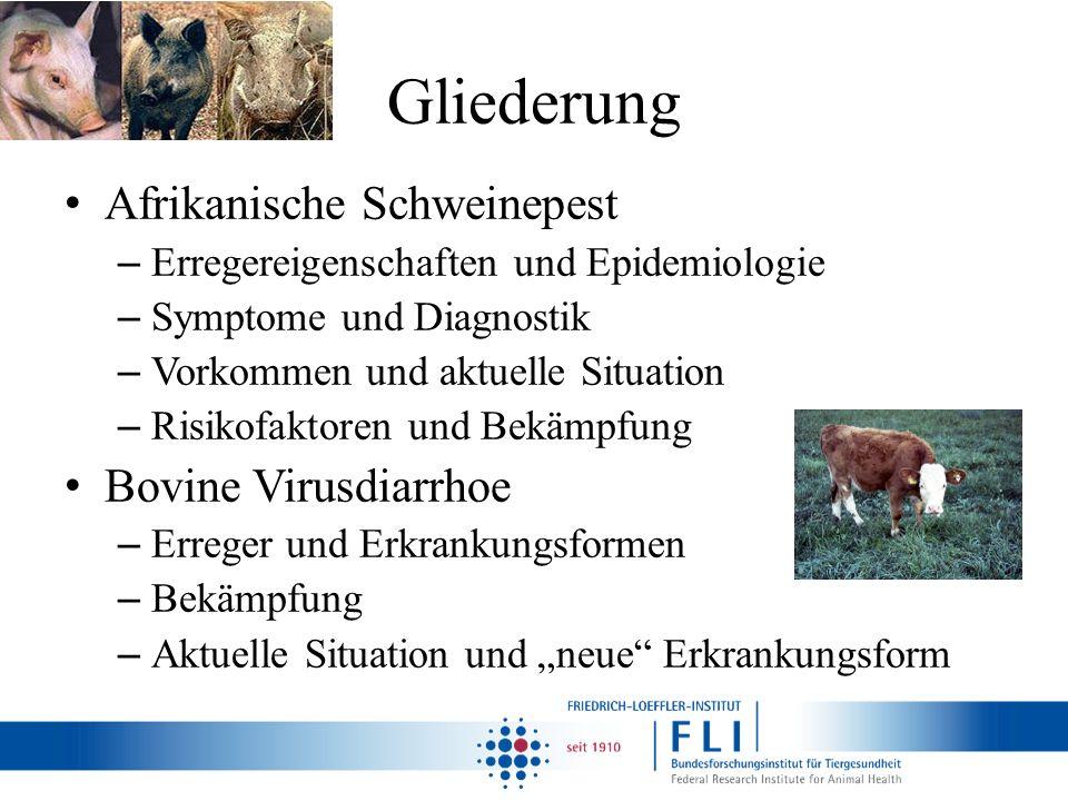 Gliederung Afrikanische Schweinepest – Erregereigenschaften und Epidemiologie – Symptome und Diagnostik – Vorkommen und aktuelle Situation – Risikofak