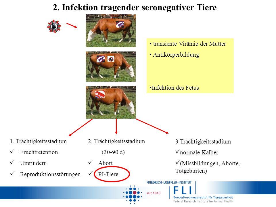 transiente Virämie der Mutter transiente Virämie der Mutter Antikörperbildung Antikörperbildung Infektion des FetusInfektion des Fetus 1. Trächtigkeit