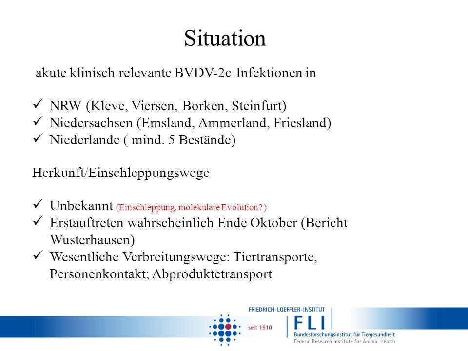 Situation akute klinisch relevante BVDV-2c Infektionen in NRW (Kleve, Viersen, Borken, Steinfurt) Niedersachsen (Emsland, Ammerland, Friesland) Nieder