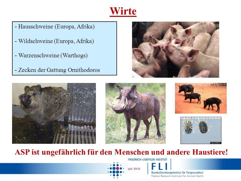 Wirte - Hausschweine (Europa, Afrika) - Wildschweine (Europa, Afrika) - Warzenschweine (Warthogs) - Zecken der Gattung Ornithodoros ASP ist ungefährli