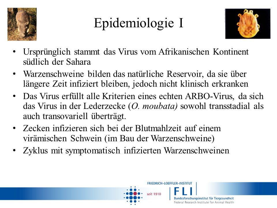 Epidemiologie I Ursprünglich stammt das Virus vom Afrikanischen Kontinent südlich der Sahara Warzenschweine bilden das natürliche Reservoir, da sie üb