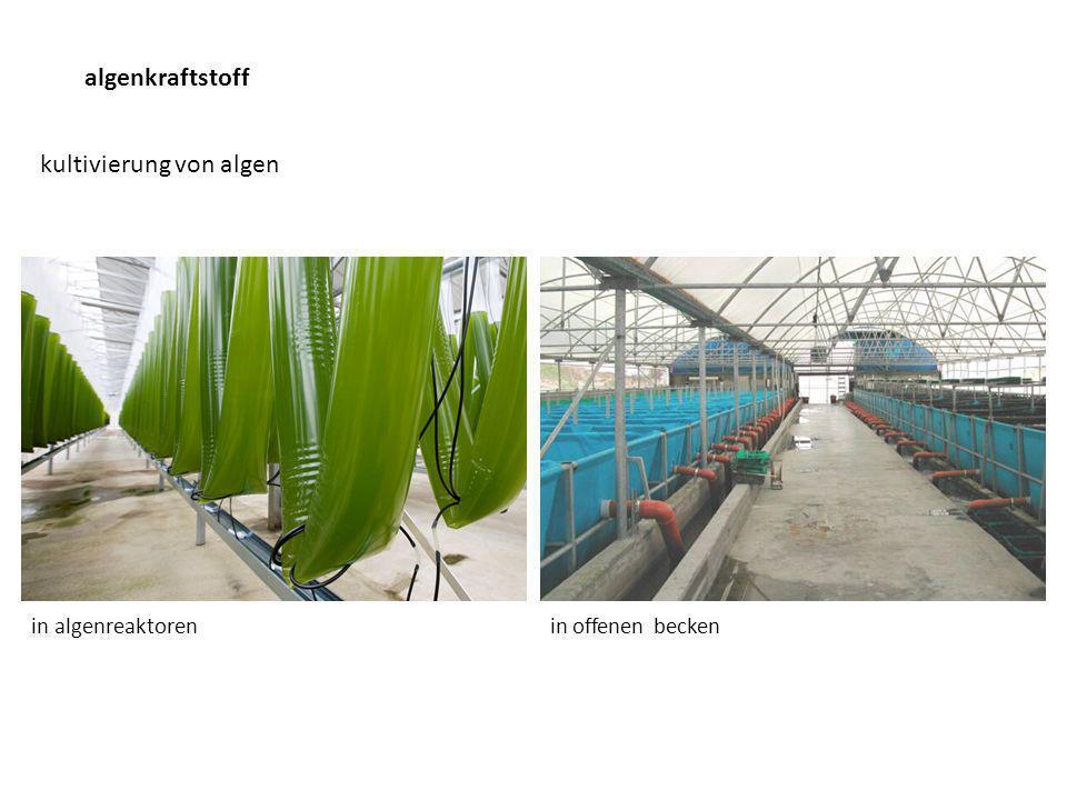 algenkraftstoff kultivierung von algen in algenreaktoren in offenen becken