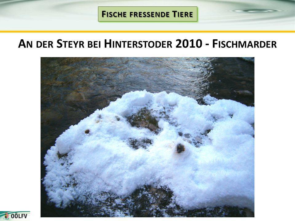 A N DER S TEYR BEI H INTERSTODER 2010 - F ISCHMARDER