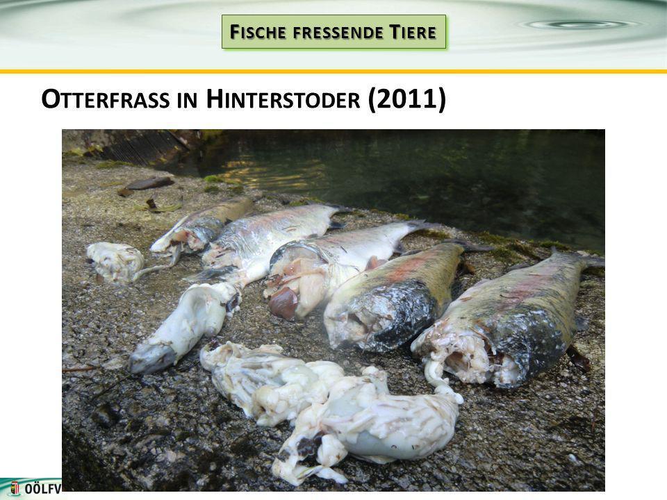 O TTERFRASS IN H INTERSTODER (2011)