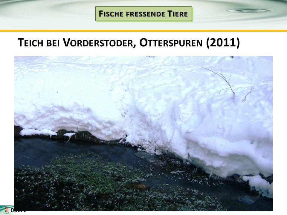 T EICH BEI V ORDERSTODER, O TTERSPUREN (2011)