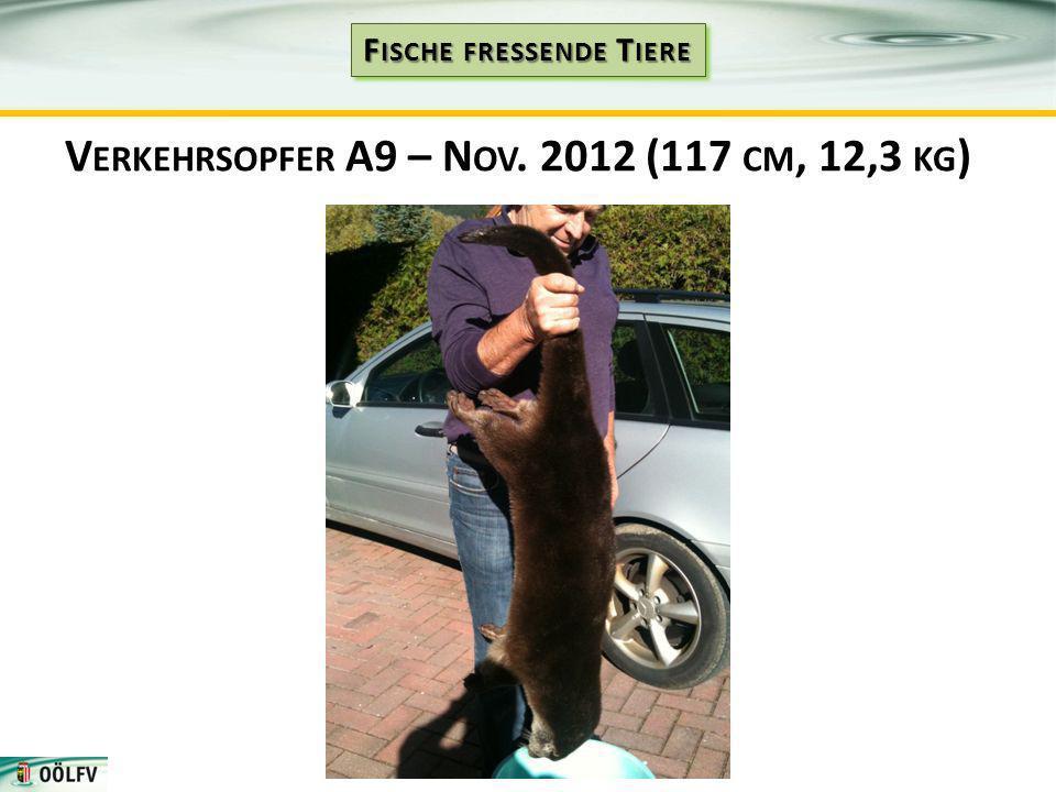 V ERKEHRSOPFER A9 – N OV. 2012 (117 CM, 12,3 KG )