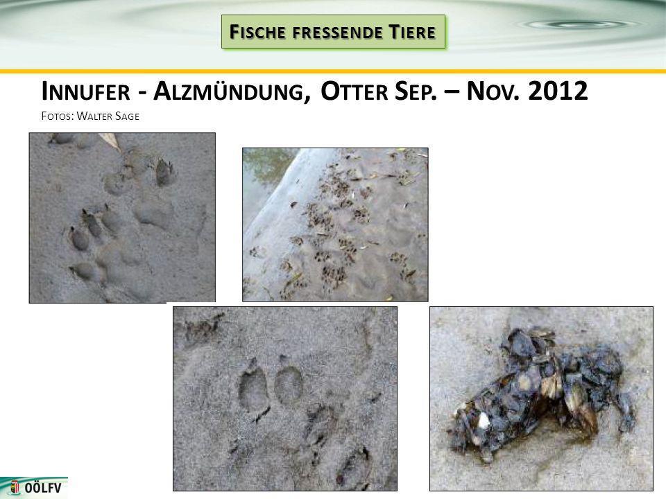 I NNUFER - A LZMÜNDUNG, O TTER S EP. – N OV. 2012 F OTOS : W ALTER S AGE