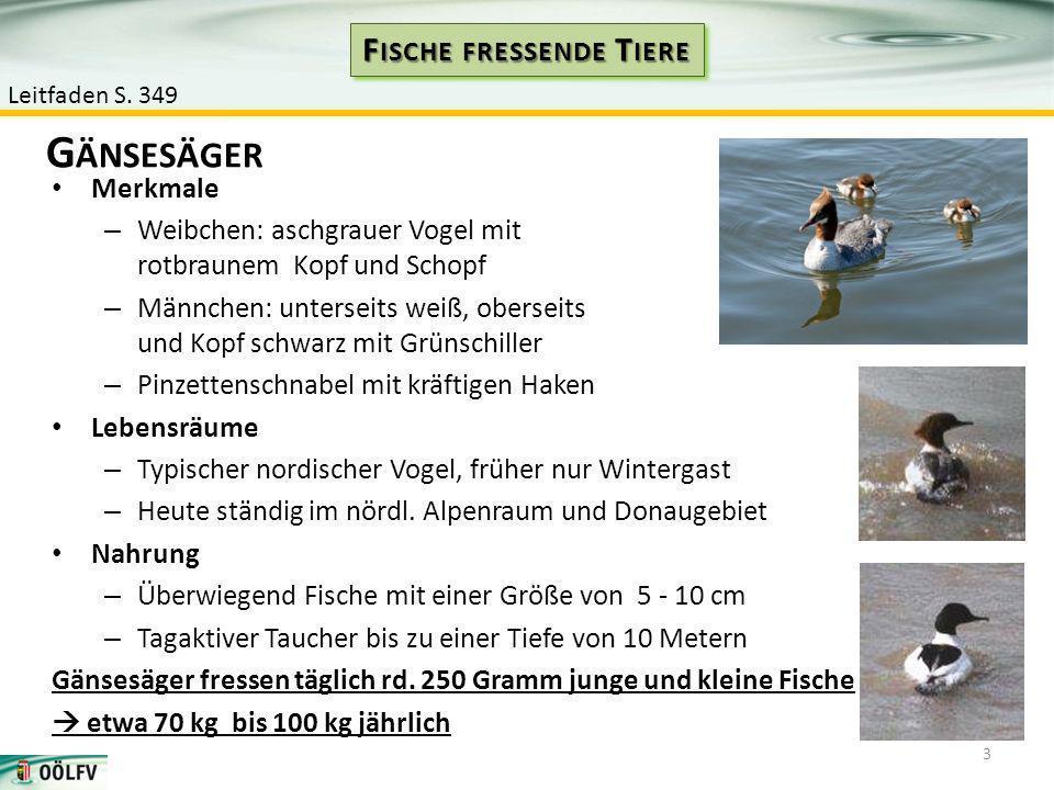 Merkmale – Weibchen: aschgrauer Vogel mit rotbraunem Kopf und Schopf – Männchen: unterseits weiß, oberseits und Kopf schwarz mit Grünschiller – Pinzet