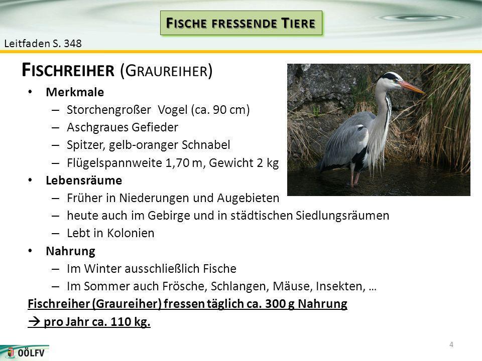 Merkmale – Storchengroßer Vogel (ca. 90 cm) – Aschgraues Gefieder – Spitzer, gelb-oranger Schnabel – Flügelspannweite 1,70 m, Gewicht 2 kg Lebensräume
