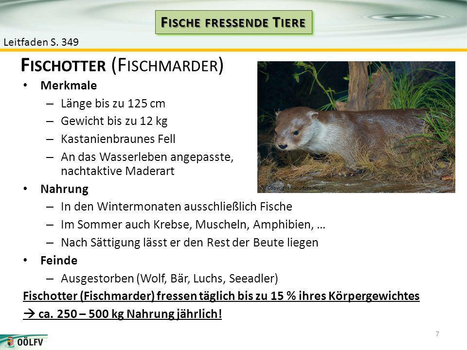 Merkmale – Länge bis zu 125 cm – Gewicht bis zu 12 kg – Kastanienbraunes Fell – An das Wasserleben angepasste, nachtaktive Maderart Nahrung – In den W