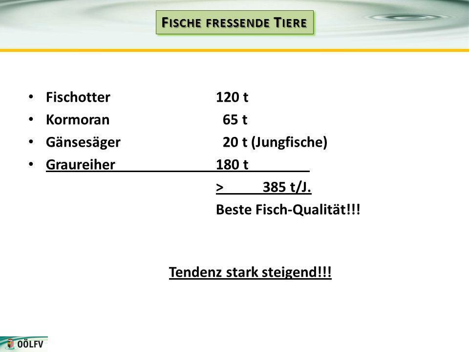 Fischotter120 t Kormoran 65 t Gänsesäger 20 t (Jungfische) Graureiher180 t > 385 t/J. Beste Fisch-Qualität!!! Tendenz stark steigend!!!