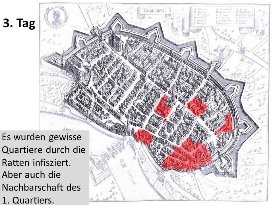 3.Tag Es wurden gewisse Quartiere durch die Ratten infisziert.