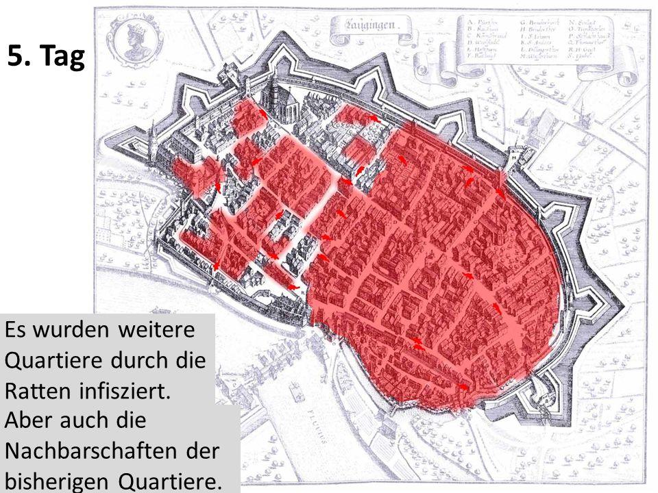 5.Tag Es wurden weitere Quartiere durch die Ratten infisziert.
