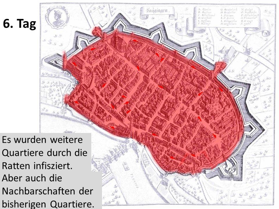 6.Tag Es wurden weitere Quartiere durch die Ratten infisziert.