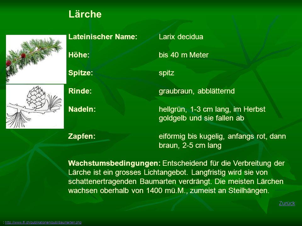 Zurück Lärche Lateinischer Name: Larix decidua Höhe: bis 40 m Meter Spitze:spitz Rinde: graubraun, abblätternd Nadeln: hellgrün, 1-3 cm lang, im Herbs