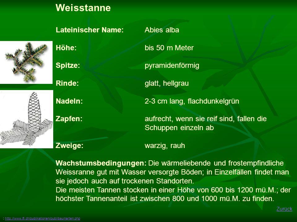 Zurück Weisstanne Lateinischer Name: Abies alba Höhe: bis 50 m Meter Spitze:pyramidenförmig Rinde: glatt, hellgrau Nadeln: 2-3 cm lang, flachdunkelgrü