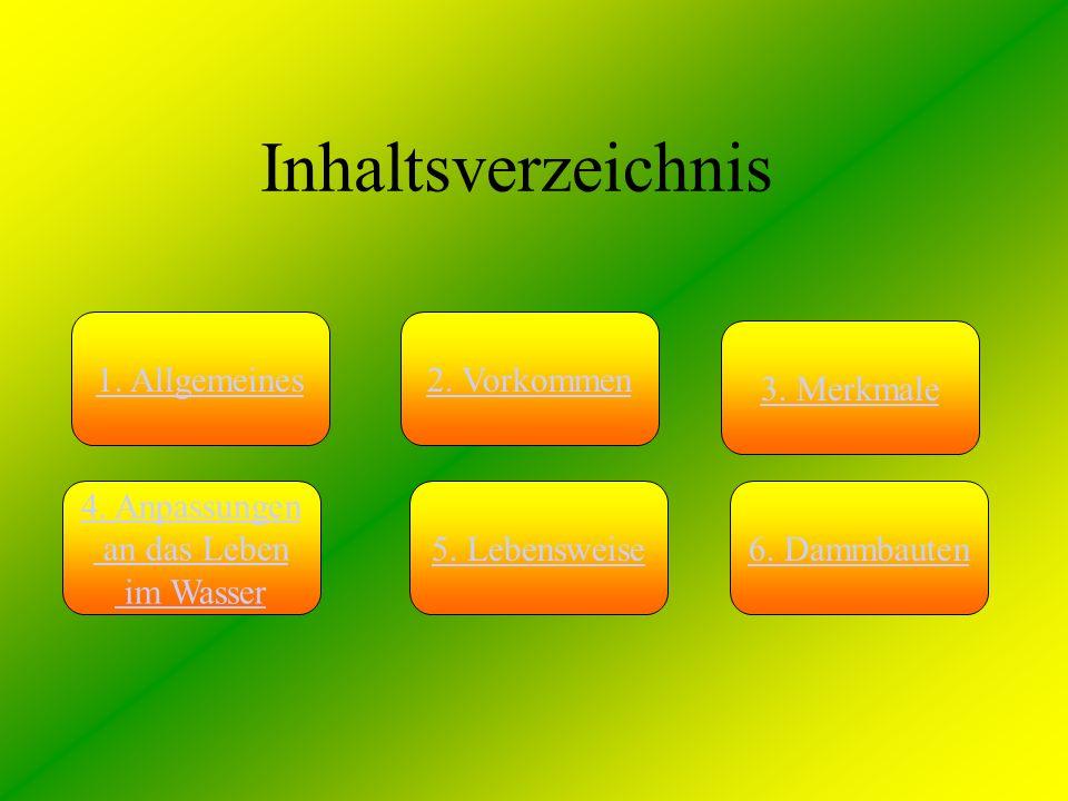 Inhaltsverzeichnis 1. Allgemeines2. Vorkommen 3. Merkmale 5. Lebensweise6. Dammbauten 4. Anpassungen an das Leben im Wasser