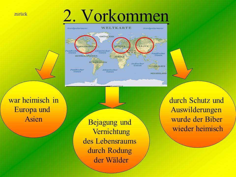 2. Vorkommen war heimisch in Europa und Asien Bejagung und Vernichtung des Lebensraums durch Rodung der Wälder durch Schutz und Auswilderungen wurde d