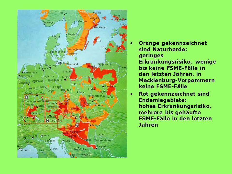 Frühsommer- Meningoenzephalitis Frühsommer-Meningoenzephalitis(FSME) ist eine vor allem in Mitteleuropa zwischen März und November auftretende infekti