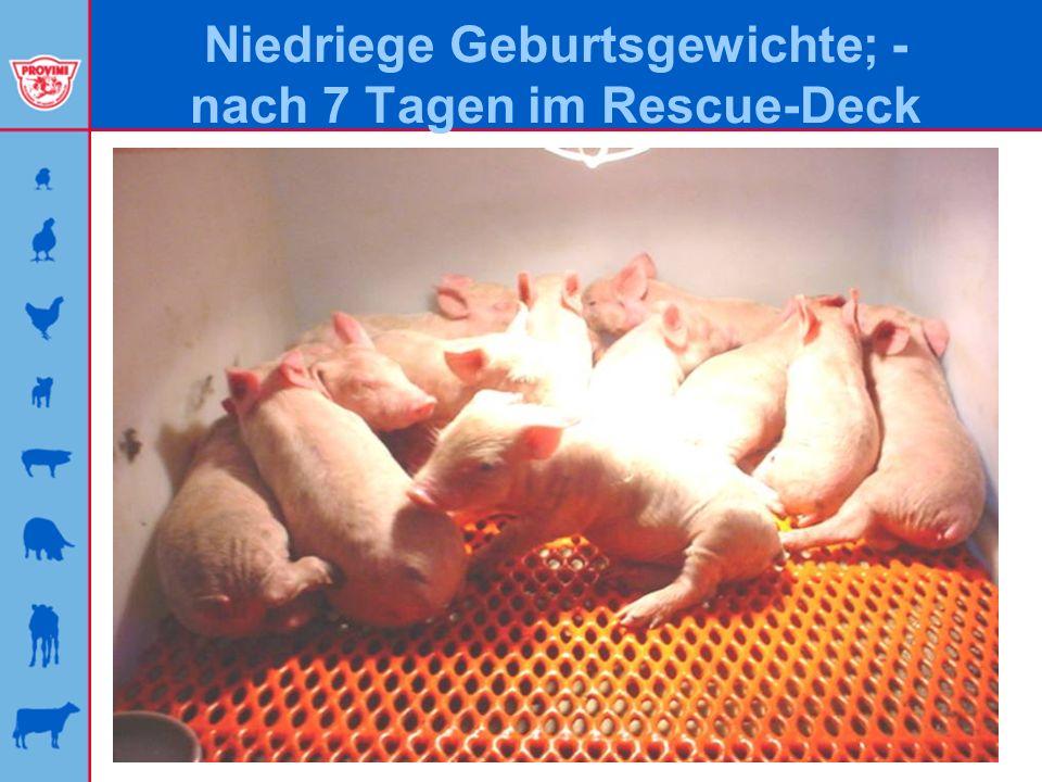 Niedriege Geburtsgewichte; - nach 7 Tagen im Rescue-Deck