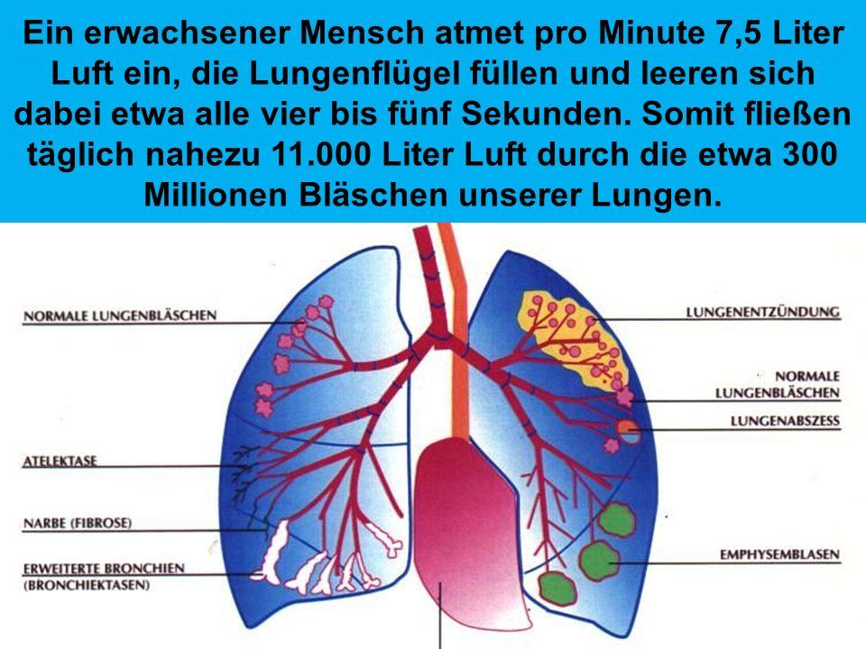 Unsere Nase hat rund 200 Millionen reizaufnehmende Zellen. Mit Hilfe dieser Sensoren kann unser Geruchsorgan durchschnittlich 10.000 unterschiedliche