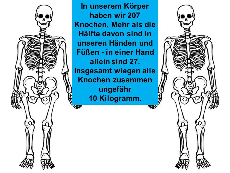 Die Haut ist das größte Organ des Menschen. Bei Erwachsenen bedeckt sie eine Fläche von rund 1,7 Quadratmetern. Sie reguliert nicht nur den Wärmehaush