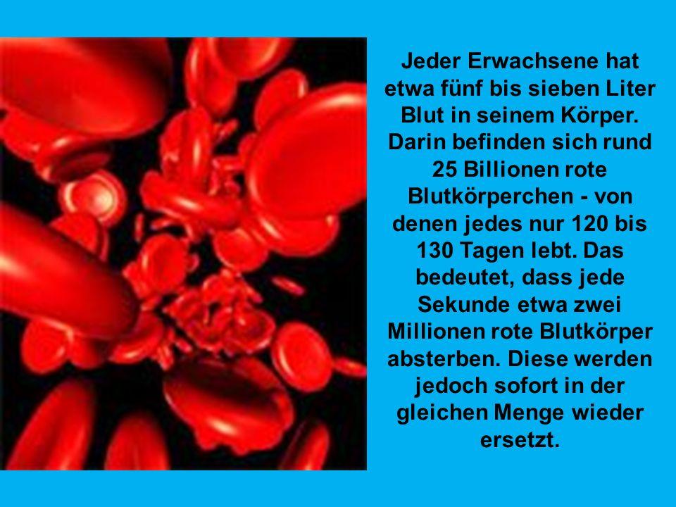 In unserem Gehirn sterben täglich 10.000 bis 100.000 Zellen - und trotzdem verlieren wir bis zum Lebensende nicht mehr als zehn Prozent aller