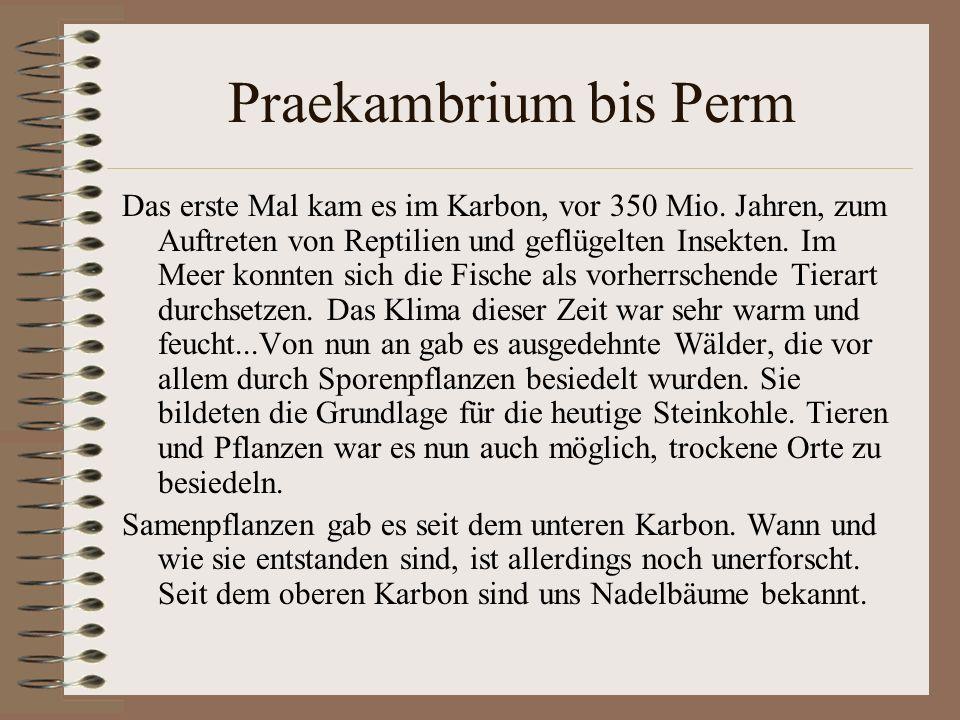 Praekambrium bis Perm Das erste Mal kam es im Karbon, vor 350 Mio. Jahren, zum Auftreten von Reptilien und geflügelten Insekten. Im Meer konnten sich