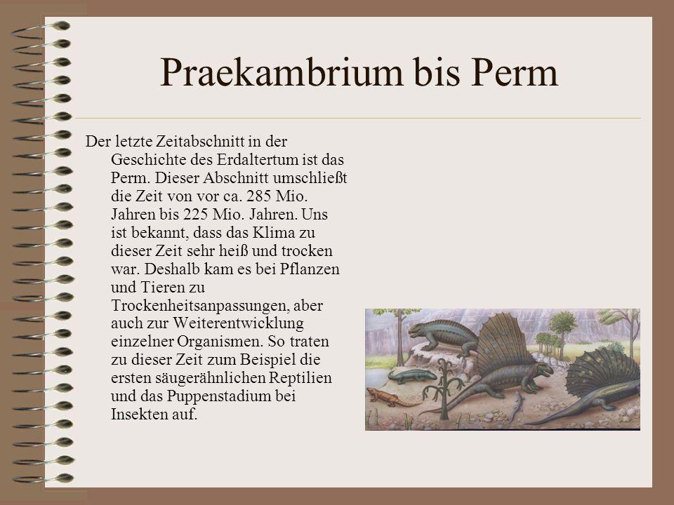 Praekambrium bis Perm Der letzte Zeitabschnitt in der Geschichte des Erdaltertum ist das Perm. Dieser Abschnitt umschließt die Zeit von vor ca. 285 Mi