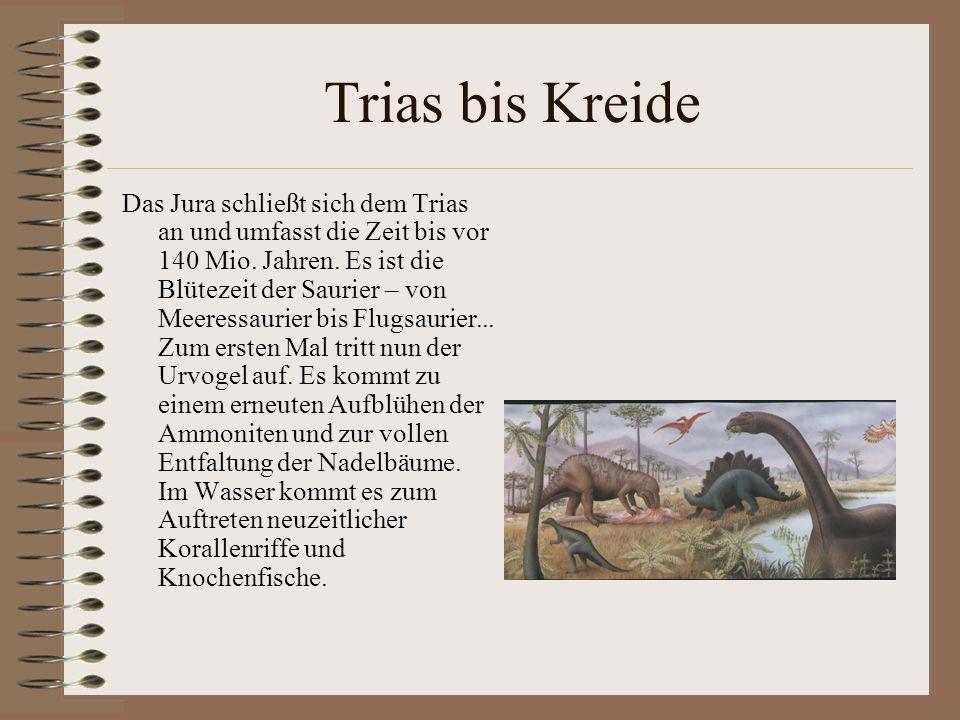 Trias bis Kreide Das Jura schließt sich dem Trias an und umfasst die Zeit bis vor 140 Mio. Jahren. Es ist die Blütezeit der Saurier – von Meeressaurie