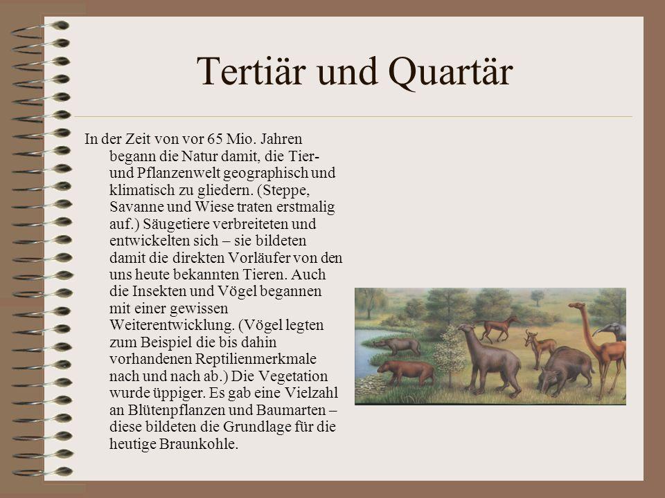 Tertiär und Quartär In der Zeit von vor 65 Mio. Jahren begann die Natur damit, die Tier- und Pflanzenwelt geographisch und klimatisch zu gliedern. (St