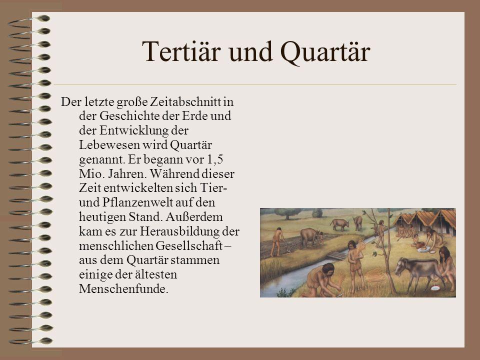 Tertiär und Quartär Der letzte große Zeitabschnitt in der Geschichte der Erde und der Entwicklung der Lebewesen wird Quartär genannt. Er begann vor 1,