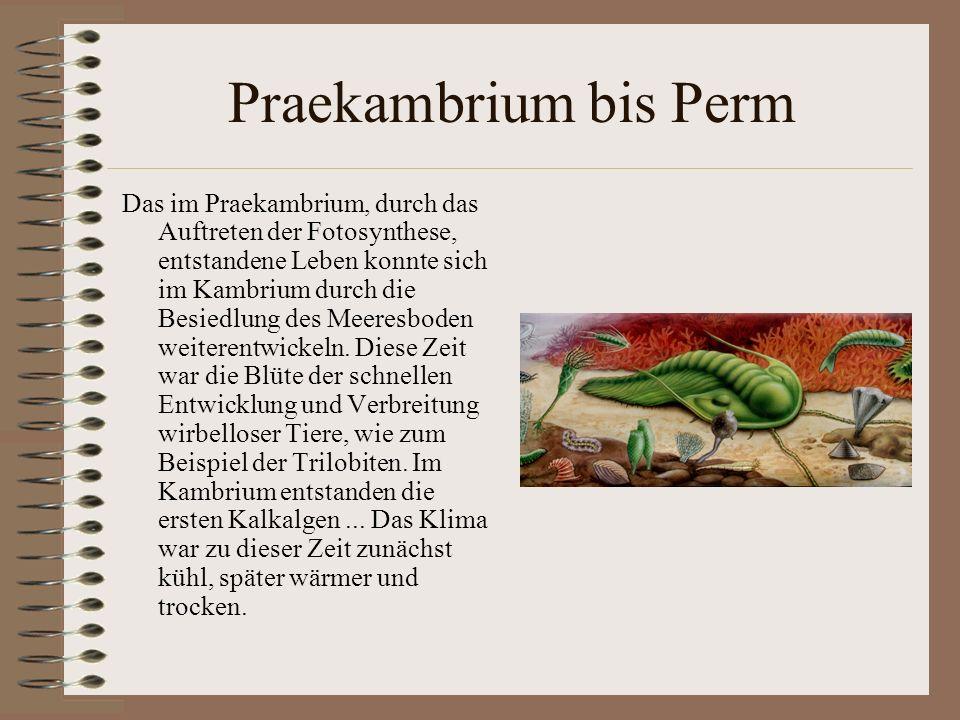 Praekambrium bis Perm Das im Praekambrium, durch das Auftreten der Fotosynthese, entstandene Leben konnte sich im Kambrium durch die Besiedlung des Me
