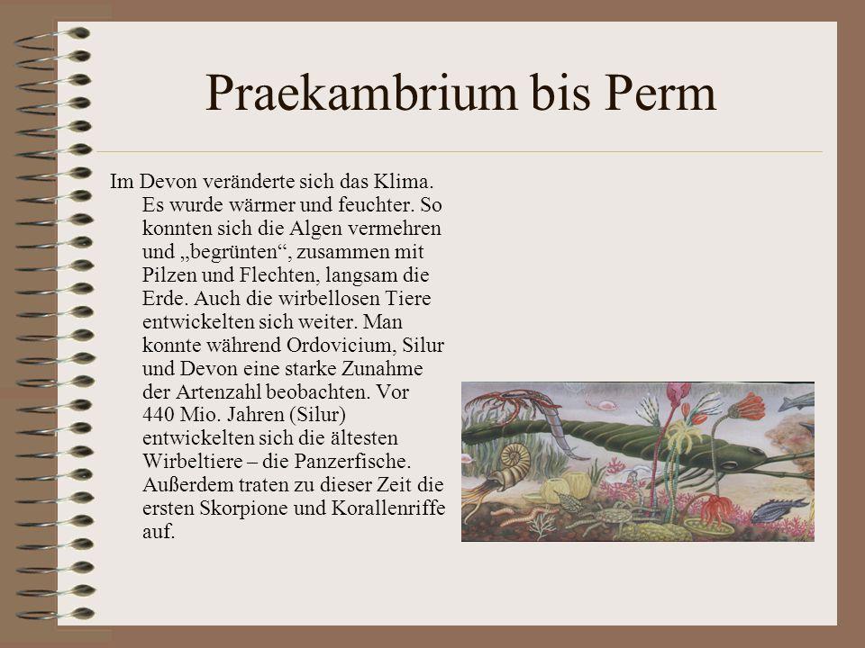 Praekambrium bis Perm Im Devon veränderte sich das Klima. Es wurde wärmer und feuchter. So konnten sich die Algen vermehren und begrünten, zusammen mi
