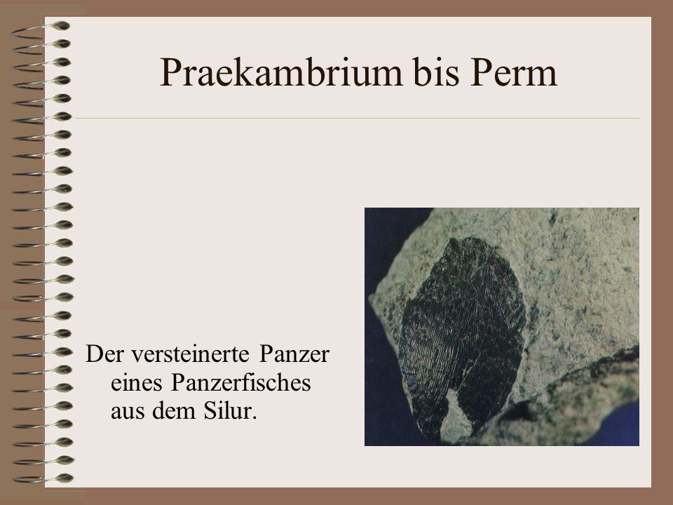 Praekambrium bis Perm Der versteinerte Panzer eines Panzerfisches aus dem Silur.