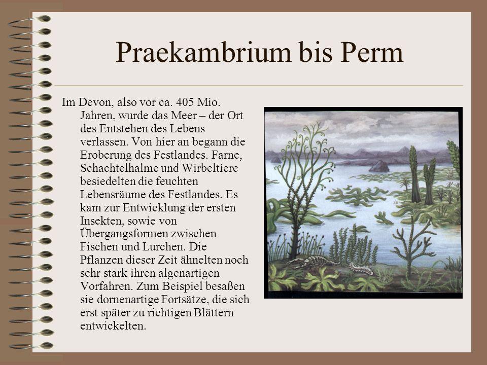 Praekambrium bis Perm Im Devon, also vor ca. 405 Mio. Jahren, wurde das Meer – der Ort des Entstehen des Lebens verlassen. Von hier an begann die Erob