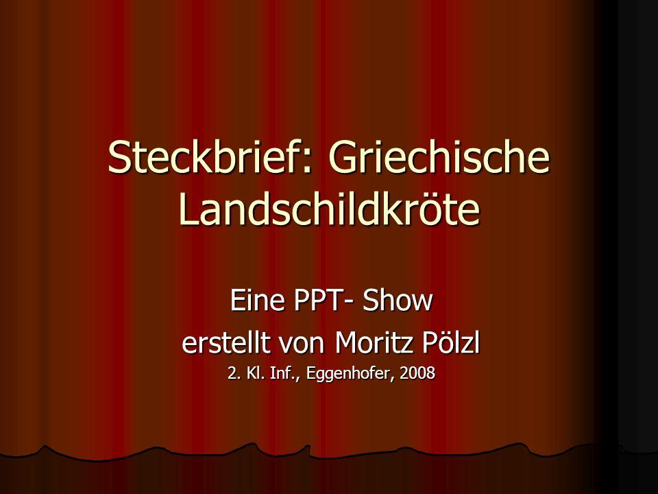 Steckbrief: Griechische Landschildkröte Eine PPT- Show erstellt von Moritz Pölzl 2. Kl. Inf., Eggenhofer, 2008