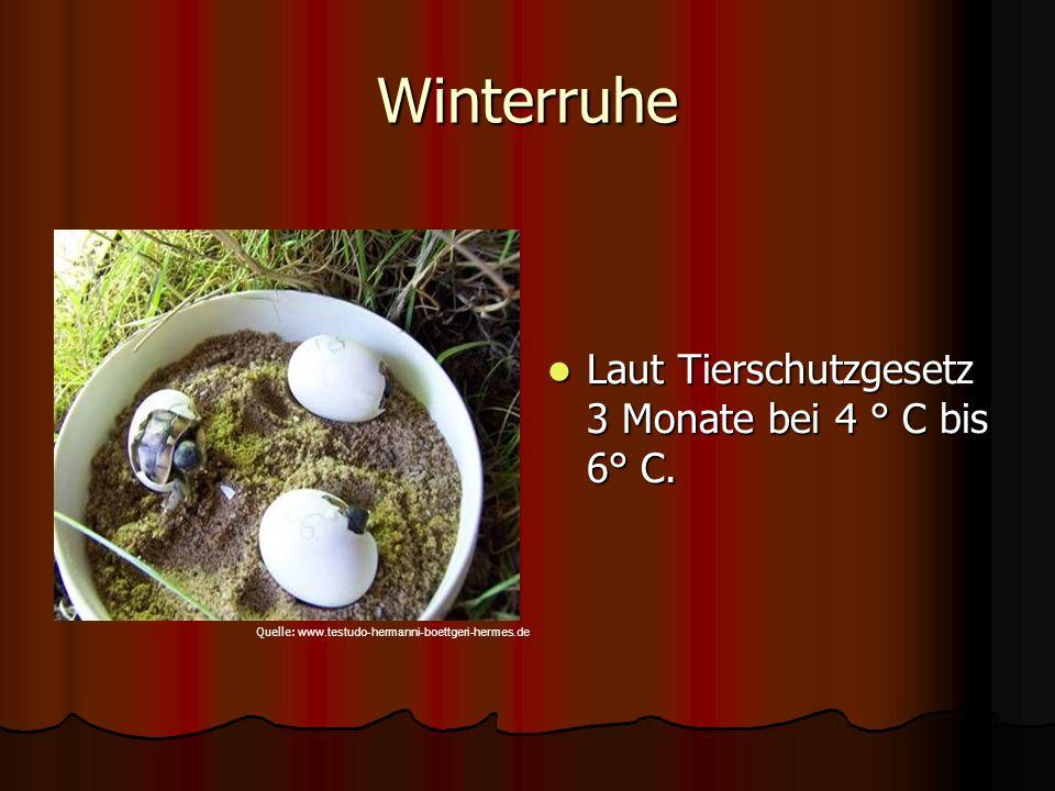 Winterruhe Laut Tierschutzgesetz 3 Monate bei 4 ° C bis 6° C. Laut Tierschutzgesetz 3 Monate bei 4 ° C bis 6° C. Quelle: www.testudo-hermanni-boettger