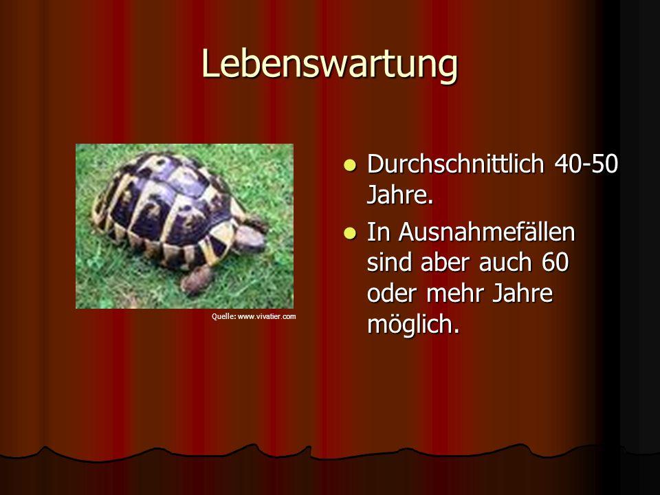 Geschlechtsreife Fortpflanzungsfähig werden Schildkröten erst mit einer Panzerlänge von etwa 12 cm.