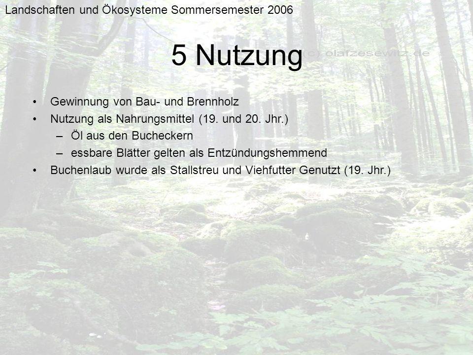 Landschaften und Ökosysteme Sommersemester 2006 5 Nutzung Gewinnung von Bau- und Brennholz Nutzung als Nahrungsmittel (19. und 20. Jhr.) –Öl aus den B