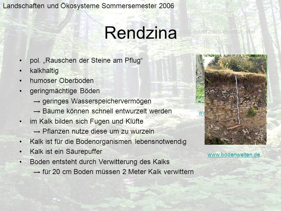 Landschaften und Ökosysteme Sommersemester 2006 Rendzina pol. Rauschen der Steine am Pflug kalkhaltig humoser Oberboden geringmächtige Böden geringes