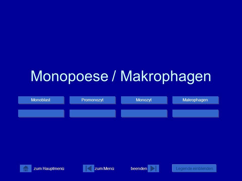 zum Menübeenden Legende einblenden zum Hauptmenü Monopoese / Makrophagen Monoblast Promonozyt Monozyt Makrophagen