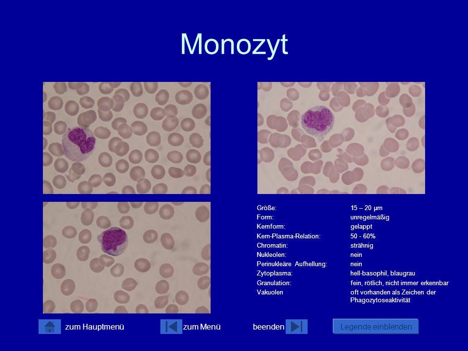 zum Menübeenden Legende einblenden zum Hauptmenü Makrophagen Monozyten sind im Blut die größten physiologisch vorkommenden Zellen.