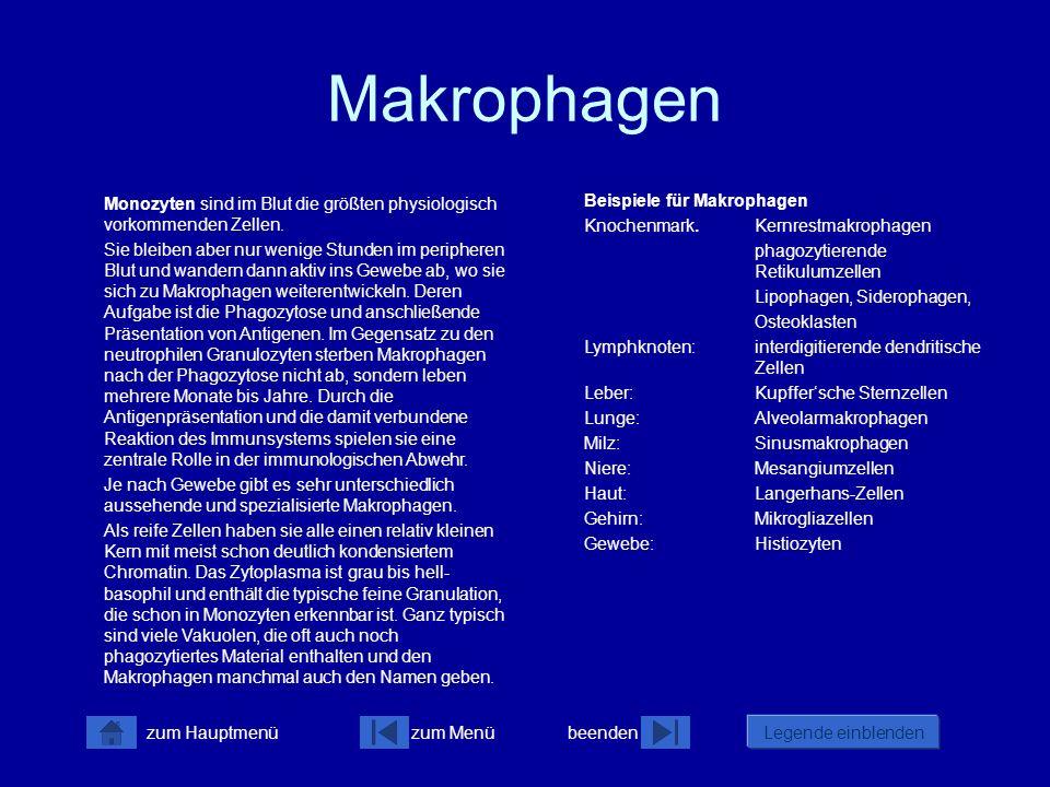 zum Menübeenden Legende einblenden zum Hauptmenü Makrophagen (1) Mo PM My MB MMy My