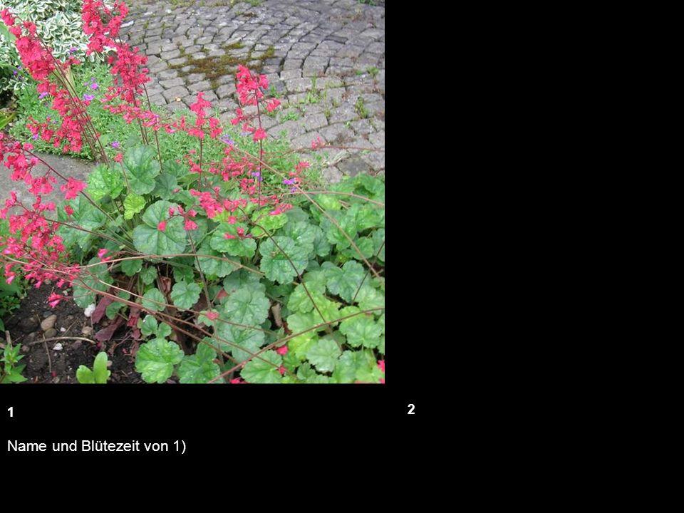 Name und Blütezeit von 1) 1 2 14