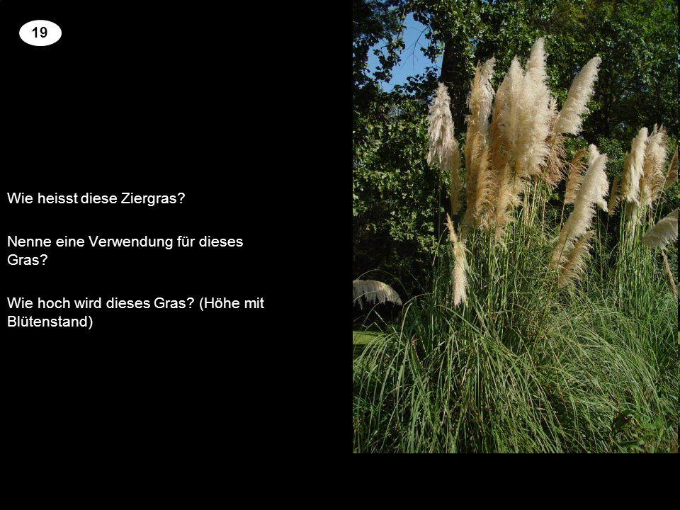 Wie heisst diese Ziergras? Nenne eine Verwendung für dieses Gras? Wie hoch wird dieses Gras? (Höhe mit Blütenstand) 2 19