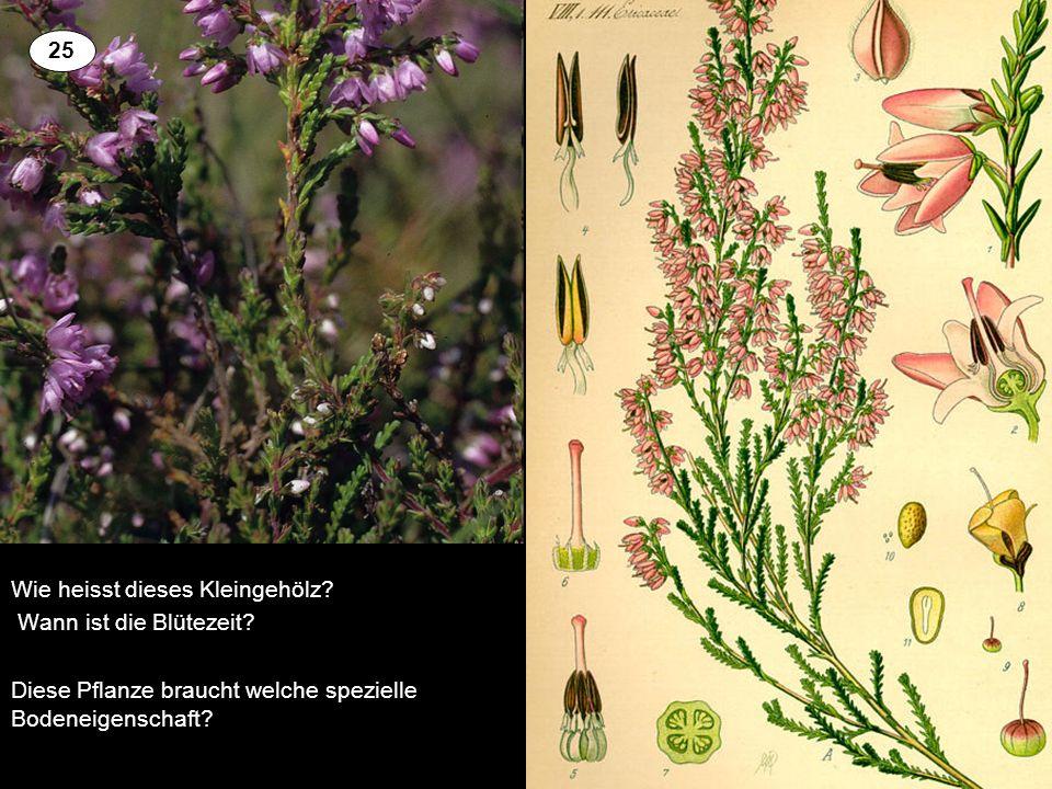 Wie heisst dieses Kleingehölz? Wann ist die Blütezeit? Diese Pflanze braucht welche spezielle Bodeneigenschaft? 2 25