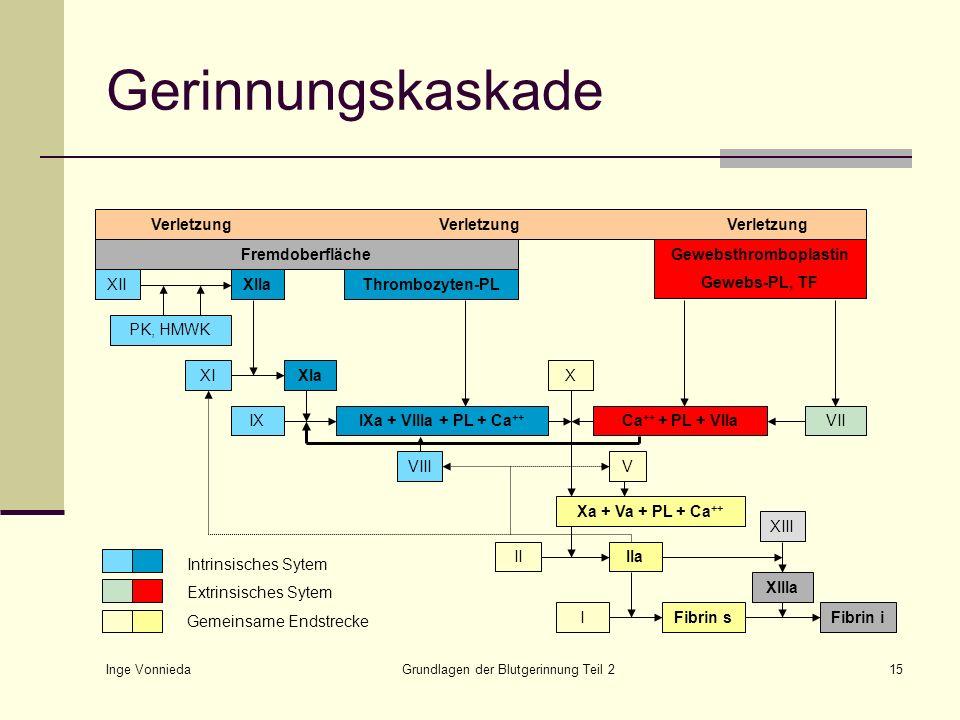 Inge Vonnieda Grundlagen der Blutgerinnung Teil 215 Gerinnungskaskade VerletzungVerletzungVerletzung Fremdoberfläche XIXIaIXIXa + VIIIa + PL + Ca ++ V