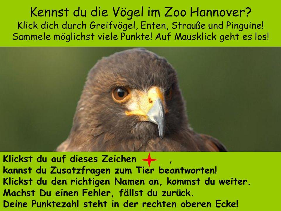 Kennst du die Vögel im Zoo Hannover.Klick dich durch Greifvögel, Enten, Strauße und Pinguine.